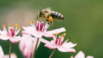 Чем полезен и какие опасности таит мёд?